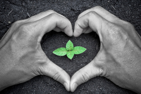two hands form a heart shape around a young green plant, save the world, growing trees  photo