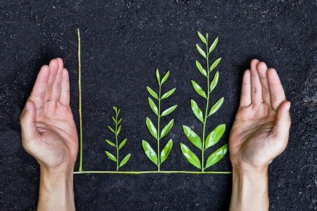 sustainability: Hands holding tree arranged as a green graph on soil background   csr   sustainable development   planting a tree   corporate social responsibility