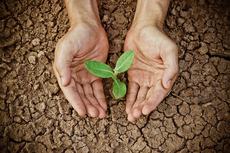 hands holding tree growing on cracked earth  hands growing tree   save the world   environmental problems   love nature   heal the world   cut tree   growing tree on crack ground   love tree Stock Photo