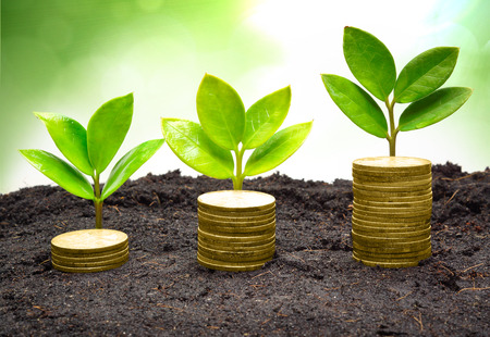 governance: boom stapels munten met kleine bomen mvo goed bestuur groen bedrijf bedrijfsethiek Stockfoto
