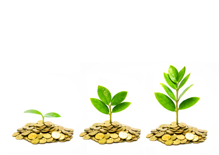 money pounds: trees growing on coins   csr   sustainable development   trees growing on stack of coins Stock Photo