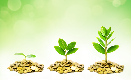 growing: trees growing on coins   csr   sustainable development   trees growing on stack of coins Stock Photo