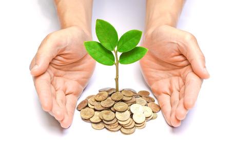csr: manos que sostienen �rboles crece en monedas  CSR  desarrollo  crecimiento econ�mico sostenible  �rboles que crecen en la pila de monedas