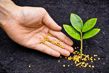 a hand giving fertilizer to a young plant   planting tree   fertilizing a young tree Stock Photo