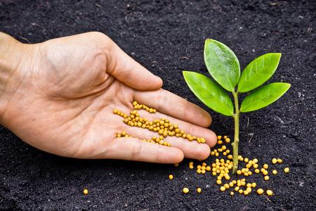 젊은 나무를 기름지게 젊은 식물 심기 나무에 비료를주는 손