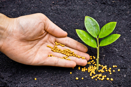 chemical fertilizer: a hand giving fertilizer to a young plant   planting tree   fertilizing a young tree Stock Photo