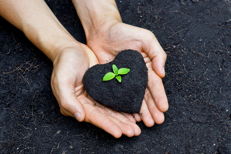 forestation: hands holding fertile soil as a heart shape with a young green tree in the middle   planting tree   growing a tree   love nature   heal the world