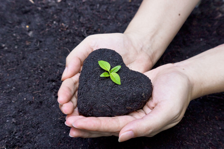 hands holding fertile soil as a heart shape with a young green tree in the middle   planting tree   growing a tree   love nature   heal the world photo