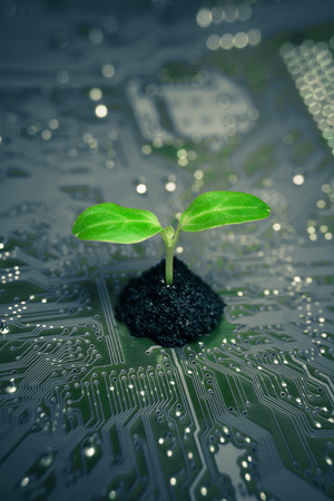 green computing:   Save to a Lightbox   9660;    Find Similar Images    Share   9660; tree growing on a computer circuit board   green it   green computing   csr   it ethics
