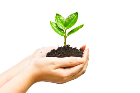 environmental responsibility: two hands holding and caring a young green plant   planting tree   growing a tree   love nature   save the world Stock Photo