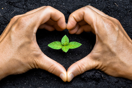 environmental responsibility: two hands forming a heart shape around a young green plant   planting tree   growing a tree   love nature   heal the world