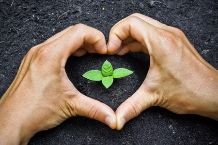 find similar images:   Save to a Lightbox   9660;    Find Similar Images    Share   9660; two hands forming a heart shape around a young green plant   planting tree   growing a tree   love nature   heal the world