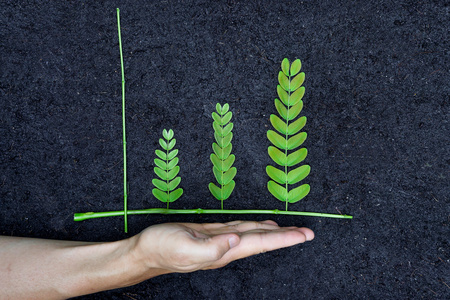 csr: Hand holding tree arranged as a green graph on soil background   csr   sustainable development   planting a tree   corporate social responsibility