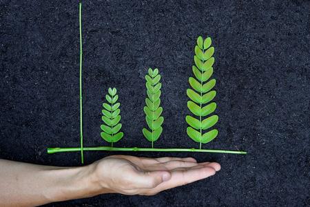 csr: Mano que sostiene �rbol dispuestas en forma de gr�fico verde sobre el desarrollo sostenible de los suelos de fondo csr la plantaci�n de un �rbol de la responsabilidad social de las empresas Foto de archivo
