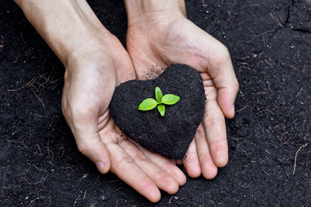 hands holding fertile soil as a heart shape with a young green tree in the middle   planting tree   growing a tree   love nature   heal the world