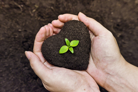 나무 사랑 자연이 세상을 치유 성장하는 중간 심기 트리에서 젊은 녹색 나무와 심장 모양으로 비옥 한 토양을 손에 들고