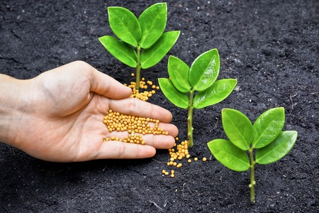 close p: a hand giving fertilizer to a young plant   planting tree   fertilizing a young tree Stock Photo