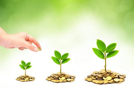 stock predictions: mano dando una moneta di alberi che crescono su mucchi di monete csr alberi di sviluppo sostenibile che cresce sulla pila di monete risparmio di denaro Archivio Fotografico