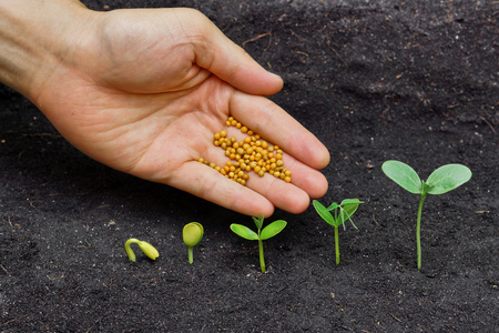 hand giving chemical fertilizer to plants growing in sequence of seed germination on soil, evolution concept photo