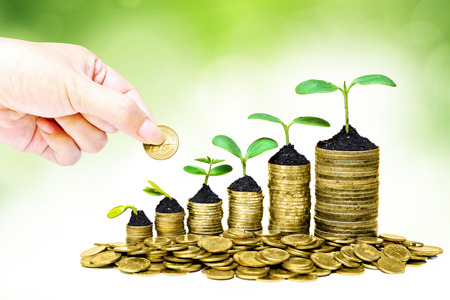 hand giving a golden coin to trees growing in a sequence of germination on piles of golden coins   csr   sustainable development   trees growing on stack of coins   saving photo