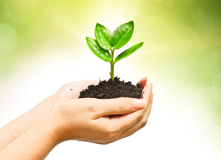 corporate responsibility: two hands holding and caring a young green plant   planting tree   growing a tree   love nature   save the world Stock Photo