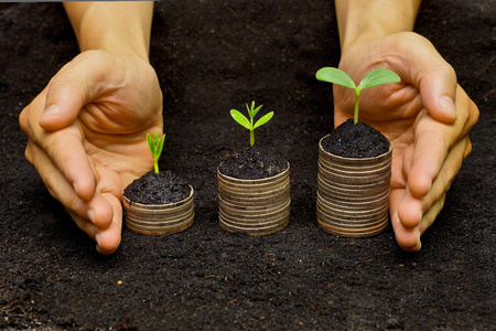 hands holding trees growing on coins   csr   sustainable development   economic growth   trees growing on stack of coins photo