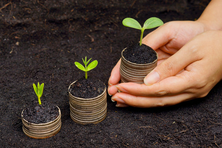 corporate governance: hands holding trees growing on coins   csr   sustainable development   economic growth   trees growing on stack of coins