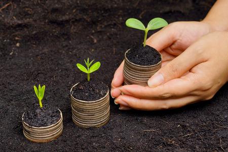 gobierno corporativo: manos que sostienen los �rboles que crecen en las monedas de los �rboles de desarrollo de crecimiento econ�mico csr sostenibles que crecen en la pila de monedas