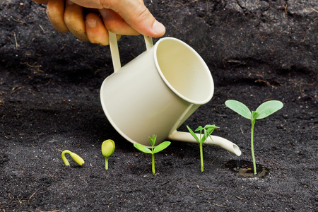 soil conservation: hand watering plants growing in sequence of seed germination on soil, evolution concept Stock Photo