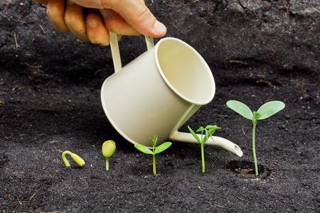 germinaci�n: regar las plantas de la mano cada vez mayor en la secuencia de la germinaci�n de la semilla en el suelo, el concepto de la evoluci�n