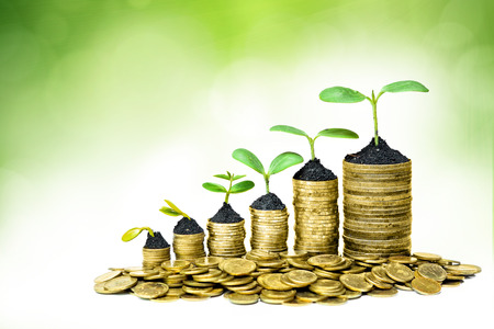 corporate governance: trees growing in a sequence of germination on piles of golden coins   csr   sustainable development   trees growing on stack of coins   saving
