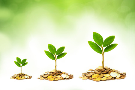 preservation: trees growing on coins   csr   sustainable development   economic growth   trees growing on stack of coins Stock Photo