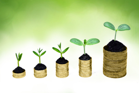 sustainable development: trees growing on coins   csr   sustainable development   economic growth   trees growing on stack of coins Stock Photo