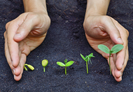 hands holding plants growing in a sequence of seed germination on soil, evolution concept