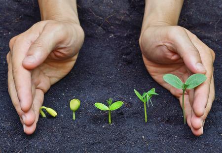 germinación: manos que sostienen las plantas que crecen en una secuencia de la germinación de la semilla en el suelo, el concepto de la evolución
