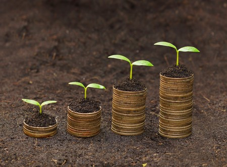 sustainability: tress growing on coins   csr   sustainable development   economic growth   trees growing on stack of coins Stock Photo