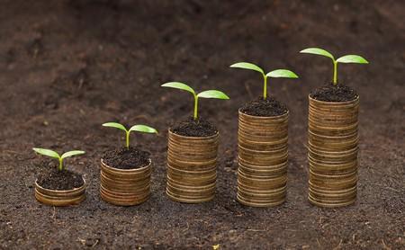 stock predictions: tress cresce su monete alberi di crescita economica sviluppo sostenibile csr che crescono sulla pila di monete Archivio Fotografico