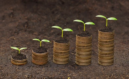 tress growing on coins   csr   sustainable development   economic growth   trees growing on stack of coins Stock Photo