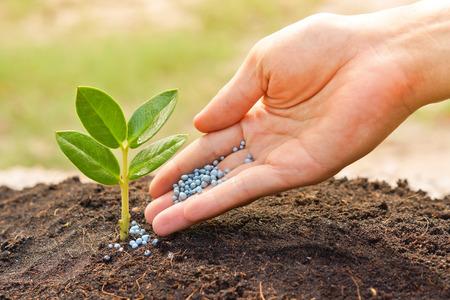 Pflanzen: eine Hand, die Dünger, um eine junge Pflanze mit warmen Sonnenlicht Baum pflanzen