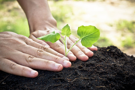 social problems: hands holding and caring a young green plant   planting tree   growing a tree   love nature   save the world Stock Photo