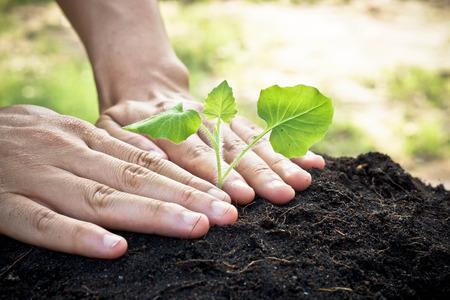 arbol de problemas: tomados de la mano y que atienden a un joven que planta el árbol planta verde que crece el amor por la naturaleza árbol salva el mundo Foto de archivo