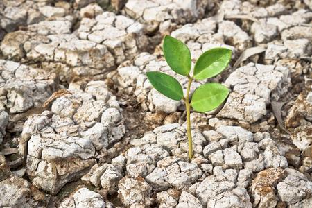 scarcity: tree growing on cracked ground Stock Photo