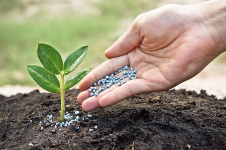 a hand giving fertilizer to a young plant with warm sunlight   planting tree Stock Photo