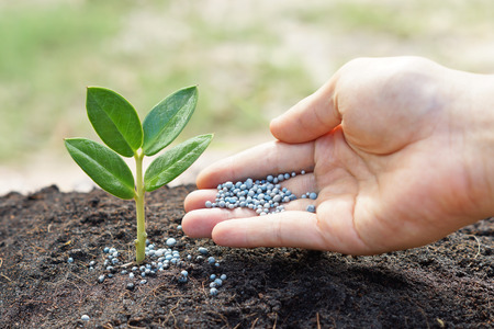 a hand giving fertilizer to a young plant with warm sunlight   planting tree photo