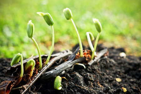plant seed: seed pods germination - plant seedling