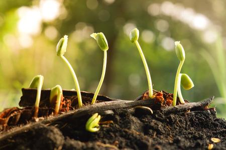 plant seed: seed pod germination - plant seedling