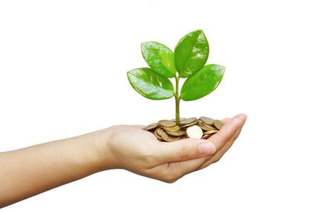 desarrollo sustentable: mano de un �rbol joven que crece en las monedas Foto de archivo
