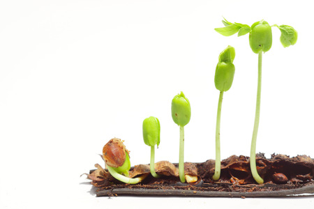 sequence of seed germination on isolated background photo