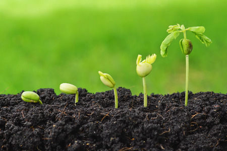 life growth: Sequence of seed germination on green background