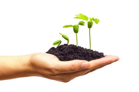 tomados de la mano y cuidar una planta verde joven que crece en una secuencia de la germinación en el fondo verde de plantación de árboles en crecimiento una planta de plántulas de árboles